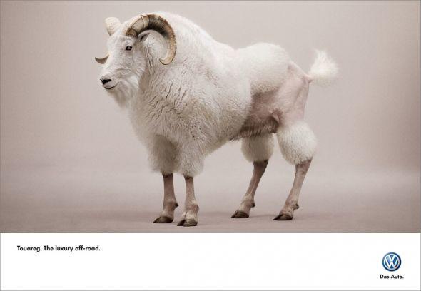 vw_touareg_goat.preview