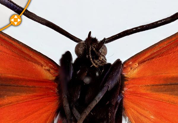 kelebek-on