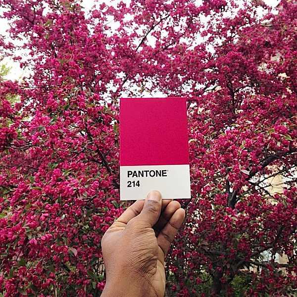 pantone-renkler-1