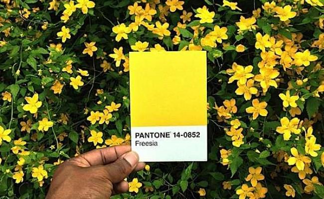 pantone-renkler-110
