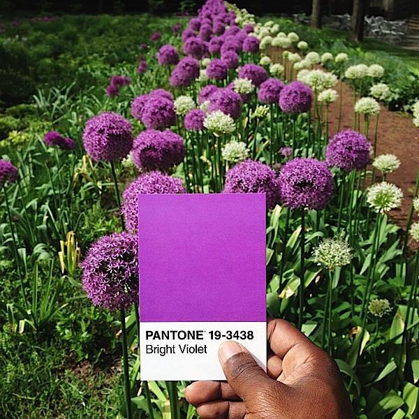 pantone-renkler-115