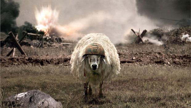 asker-koyun
