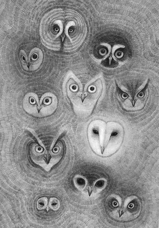 baykus-kafalari
