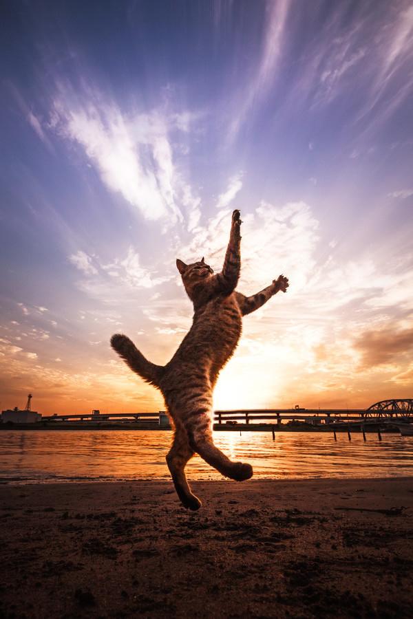 dansci-kedi