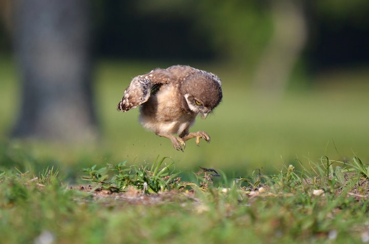 eglenceli-baykus
