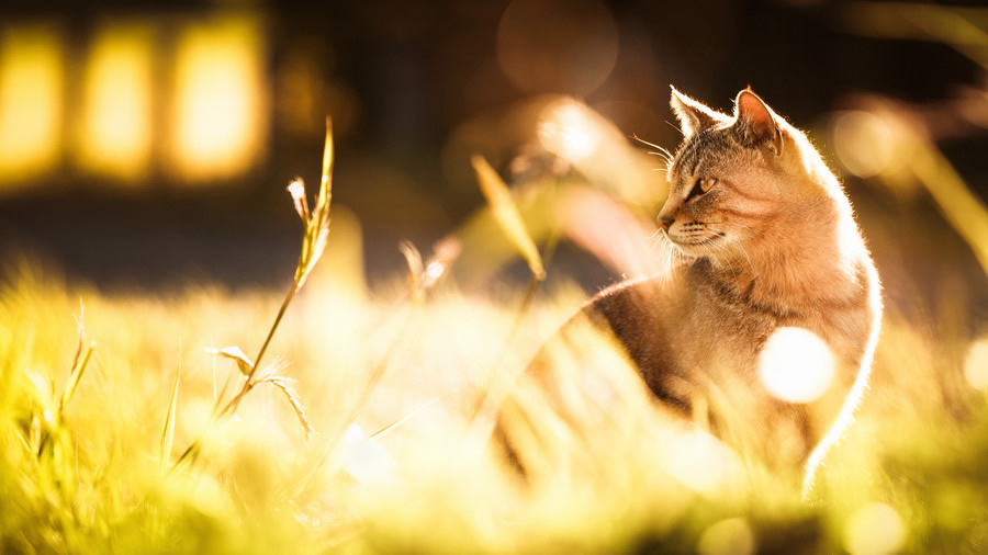 fotojenik-kedi