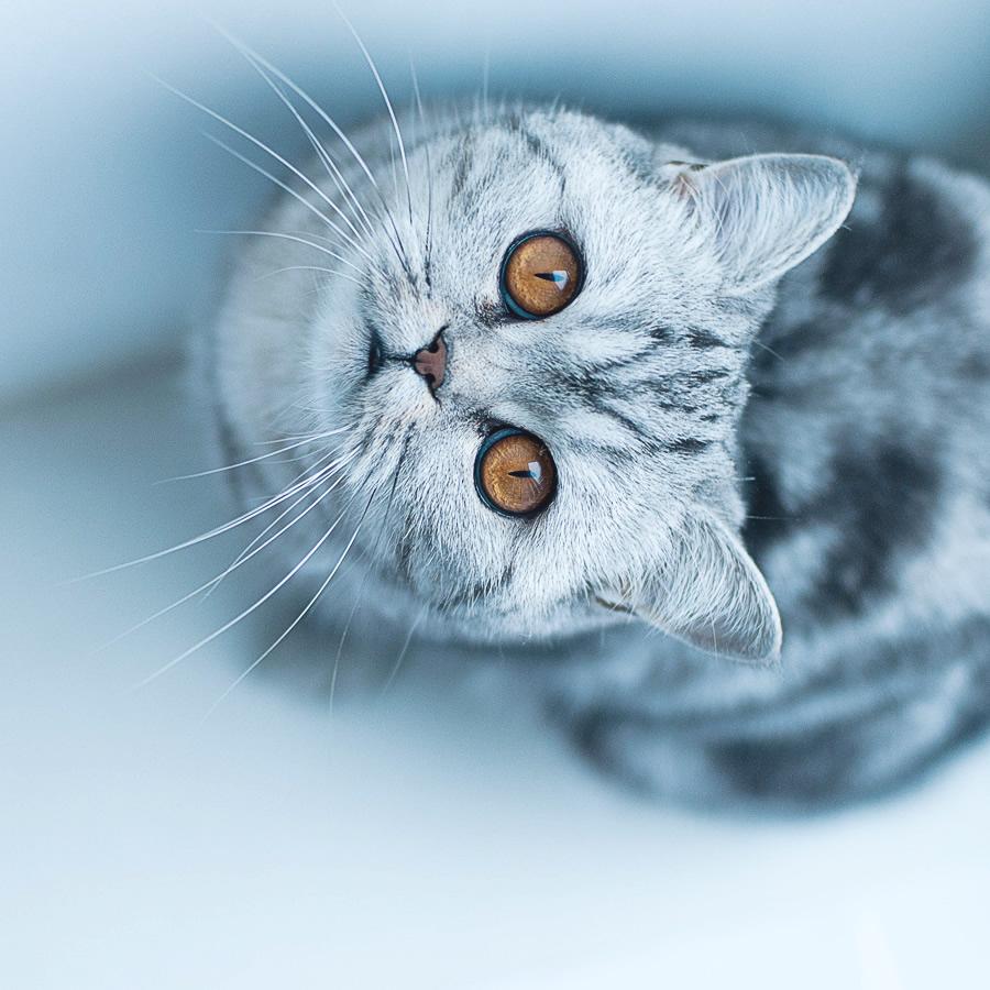 guzel-kedi