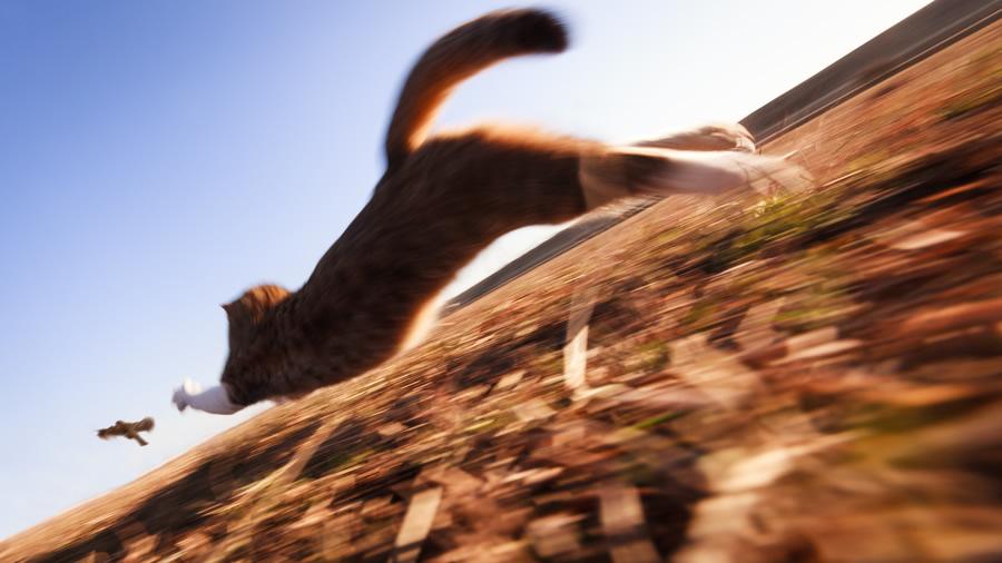 hizli-kosan-kedi