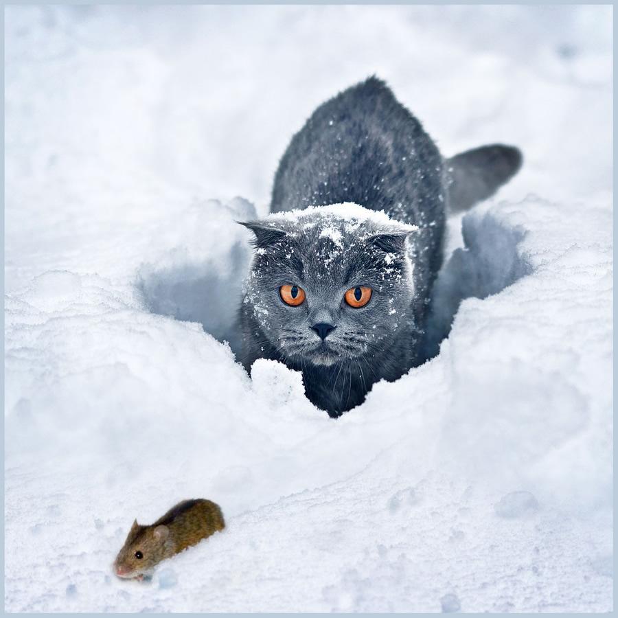 karda-kedi