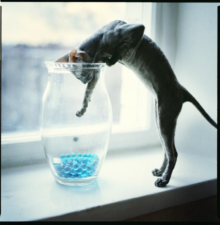 kedi-fotograflari