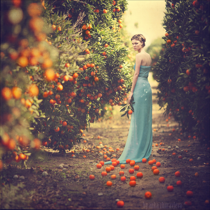 portakal-agaclari