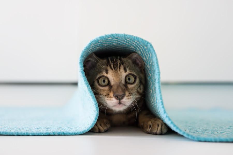 saklanan-kedi