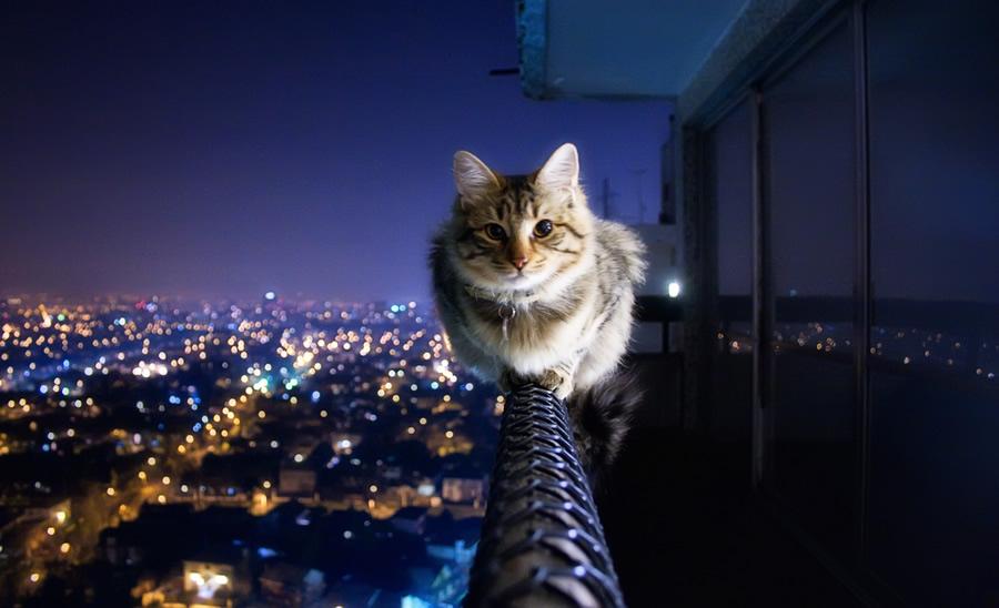 sehirli-kedi