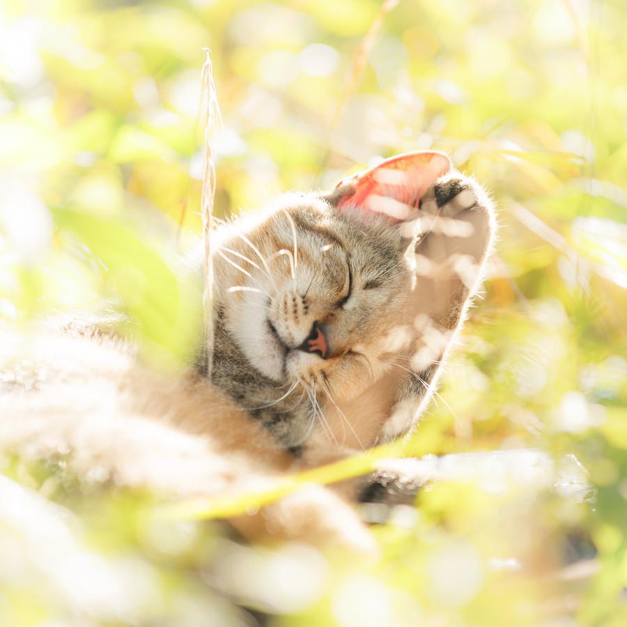 sevimli-kedi