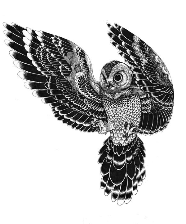 siyah-beyaz-baykus