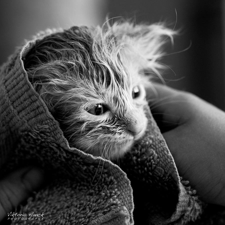 usumus-kedi