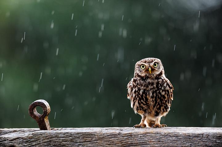 yagmur-yagiyor-pampa