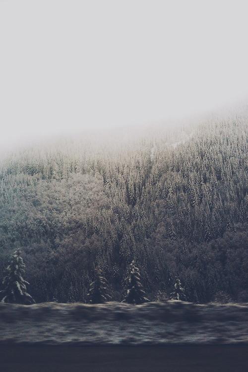 anlamsiz-fotograflar-orman
