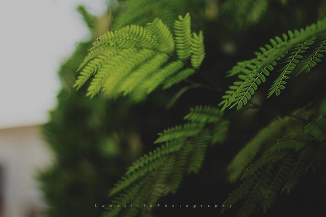 blur-fotograf-ornekleri-14