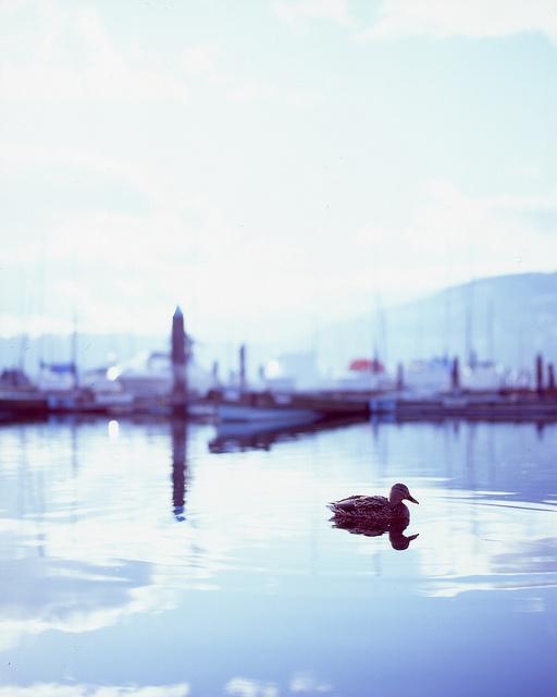 blur-fotograf-ornekleri-18