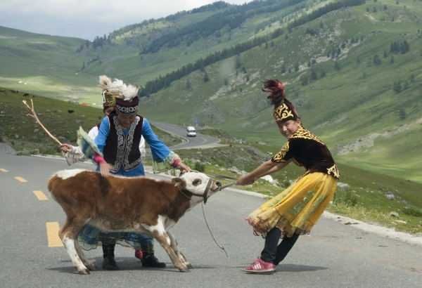 dagda-bayirda-hayvan-suruleri-3