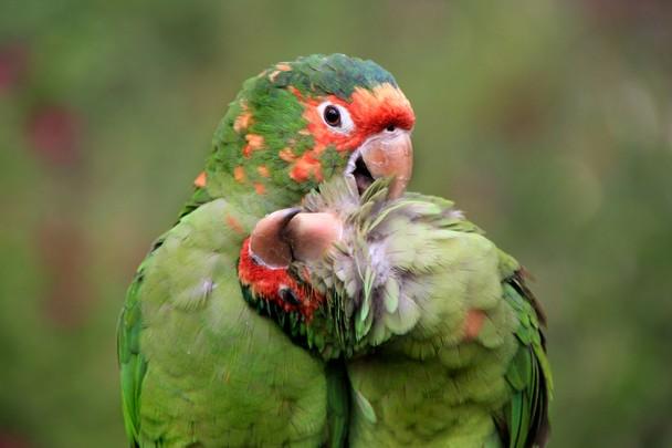 odullu-fotograflar-papaganlar