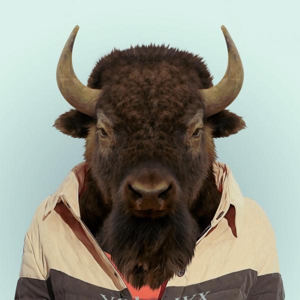 hayvanlar-dunyasi-bizon