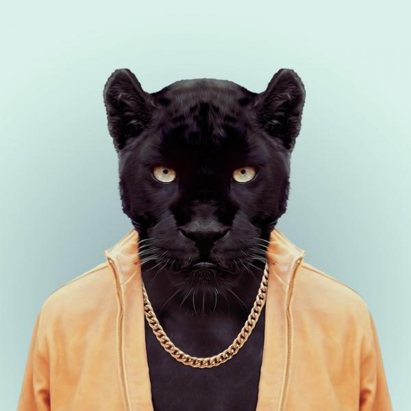 hayvanlar-dunyasi-jaguar