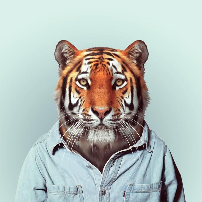 hayvanlar-dunyasi-kaplan