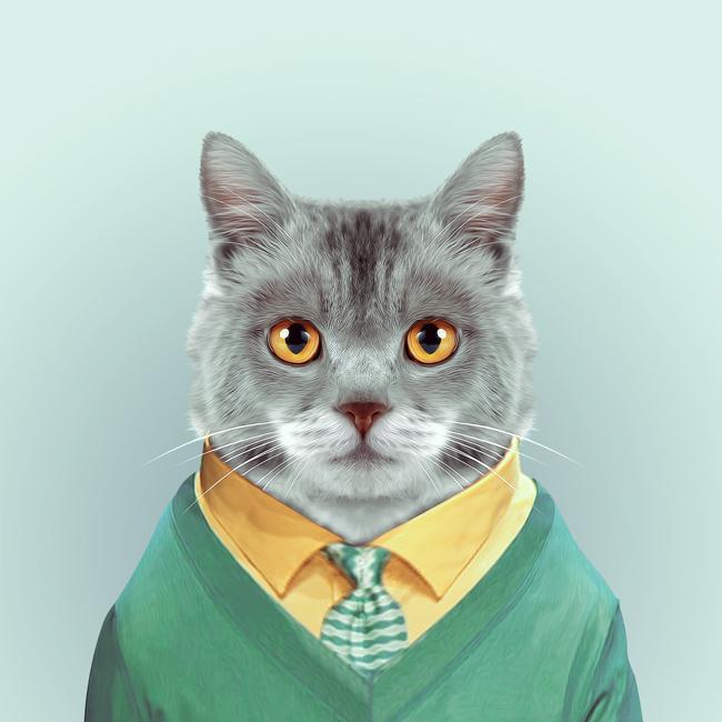 hayvanlar-dunyasi-kedi