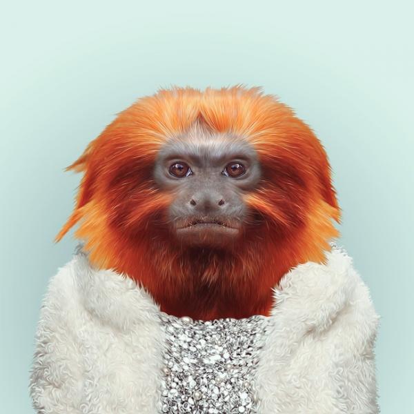 hayvanlar-dunyasi-maymun