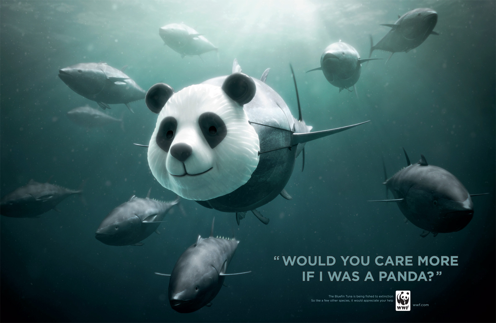 panda-reklam-tasarimlari